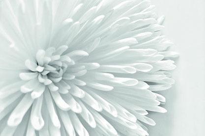 White Flower Heart Maxi Paper Poster