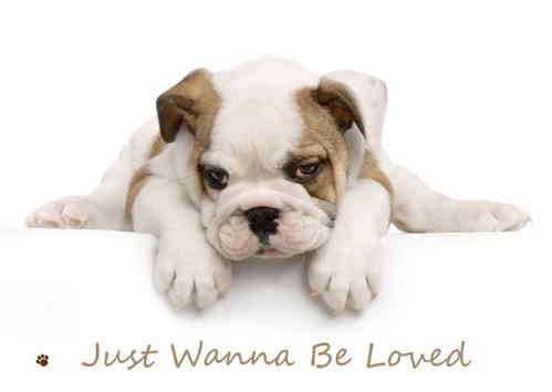 Just Wanna Be Loved Puppy Mini A2 Paper Poster
