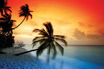 Maldives Sunset Palm Beach - Maxi Paper Poster