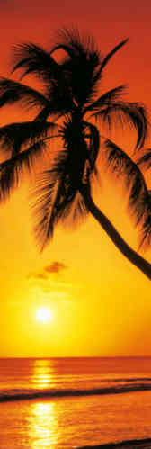 Palm Tree Golden Sunset - Door Paper Poster