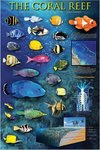 Coral Reef - Maxi Paper Poster