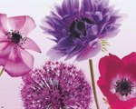 Purple Flowers - Mini Paper Poster