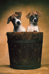 Bucket 2 Cute Puppies - Maxi Paper Poster