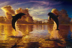 Lassen, Celestial Harmony Dolphins - Maxi Paper Poster