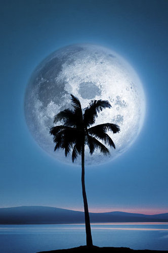 Dreamland Moonlight Palm Tree Maxi Paper Poster
