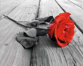 Red Rose - On Wood - Mini Paper Poster