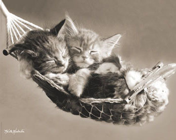 Kieth Kimberlin - Kittens In Hammock - Mini Paper Poster