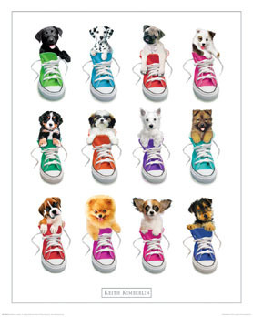 Keith Kimberlin - Puppies In Sneakers  - Mini Paper Poster