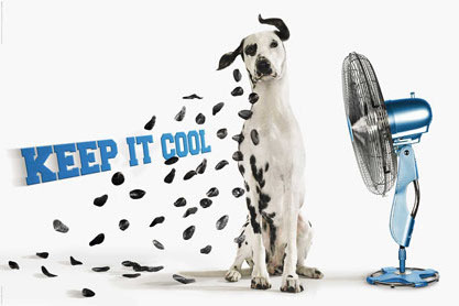 Keep it Cool Dalmation - Maxi Paper Poster