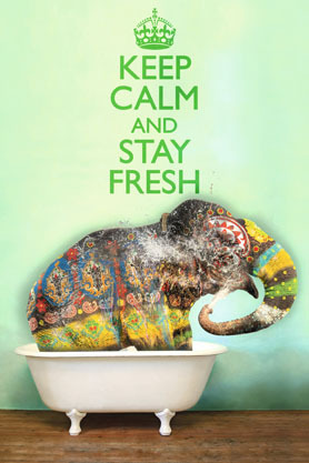Keep Calm And Stay Fresh Elephant - Maxi Paper Poster