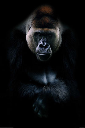 Kings Of Nature Gorilla - Maxi Paper Poster