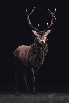 Beautiful Stag Black Background - Maxi Paper Poster