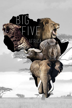 The Big Five - African Animals - Maxi Paper Poster