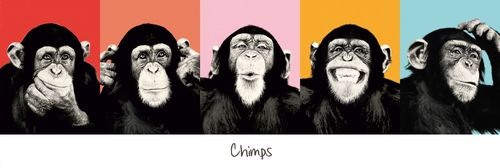 The Chimps Five Faces - Door Paper Poster