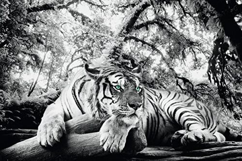 Tiger is Watching you - Giant Paper Poster